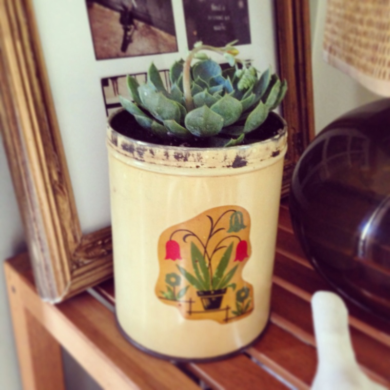 Diy succulent in tin can